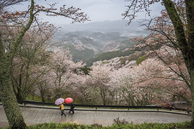 lluvia en Japón