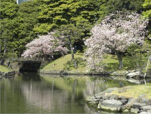 parque Hamarikyu Tokio